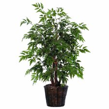 Bushes Artificial Potted Natural Ming Aralia Tree in Basket