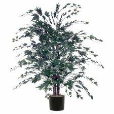 Maple Bush Tree in Pot