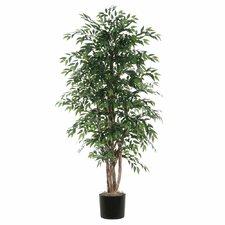 Ridge Fir Smilax Executive Style Tree in Pot