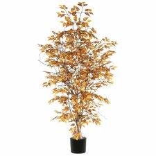 Ridge Fir Birch Executive Tree in Pot