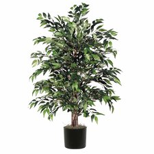 Smilax Bush Tree in Pot