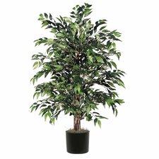 Smilax Bush Tree in Pot
