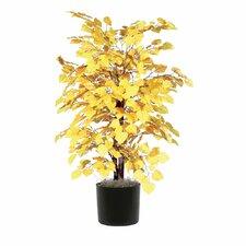 Aspen Bush Tree in Pot