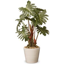 Philodendron Floor Plant in Pot