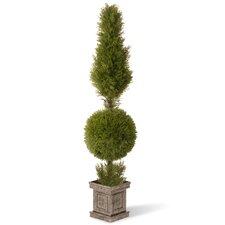 Juniper Cone and Ball Topiary Tree in Square Pot