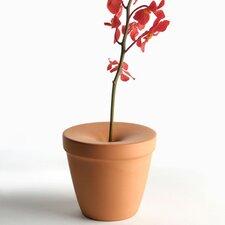 Bud Vase (Set of 4)