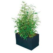 Kenji Rectangular Planter Box