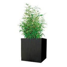 Kenji Square Planter Box