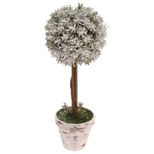 """Home Accent 14"""" Ball Topiary in Pot"""