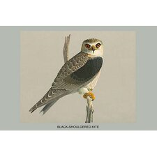 'Black Shouldered Kite' by Louis Agassiz Fuertes Graphic Art