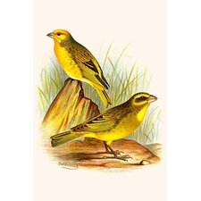 'Cape Canary and Sulpher-Colored Seed Eater' by F.W. Frohawk Painting Print