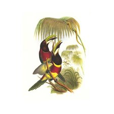 'Red Necked or Double Collared Aracari' by John Gould Graphic Art