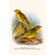 'Cape Canary and Sulpher-Colored Seed Eater' by F.W. Frohawk Graphic Art
