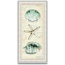 Coastal Shells Framed Graphic Art