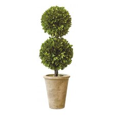 Box Double Ball Topiary in Pot