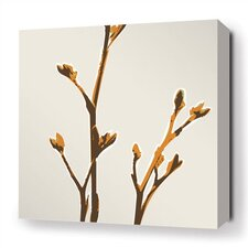 Botanicals Axis Stretched Graphic Art on Wrapped Canvas in Sunshine