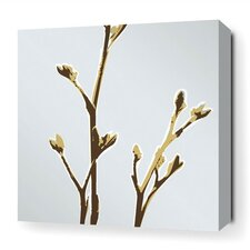 Botanicals Axis Stretched Graphic Art on Wrapped Canvas in Blue
