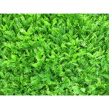 2' H x 2' W Artificial Boxwood Topiary (Set of 6)