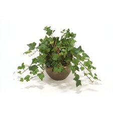 Mountain Ivy Desk Top Plant in Planter (Set of 3)
