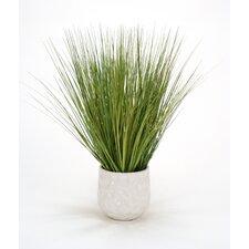 Basil Grass in Round Planter