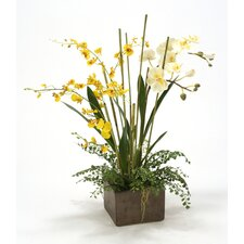 Orchid Garden with Fern in Planter