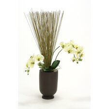 Orchids, Marsh Reeds, Succulents in Wood Vase