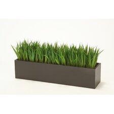 Grass in Rectangular Wood Planter