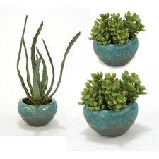 3 Piece Succulents Desk Top Plant in Pot Set