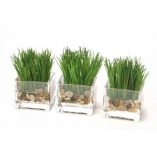 Waterlook Kelly Green Grass in Rectangle Vase (Set of 3)