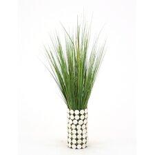 Waterlook Variegated Grass in Cylinder Glass Pot