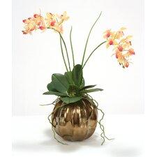 Rose Pink Cream Mini Orchid in Ball Vase