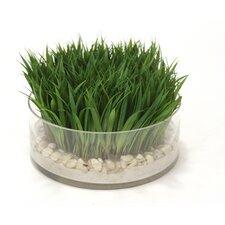 Waterlook Grass in Glass Pot