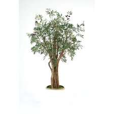 Olive Tree in Planter