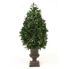 Laurel Pear-Shaped Topiary in Urn