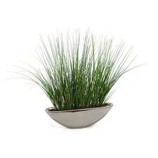 Two-Tone Green Grass in Oval Ceramic Bowl