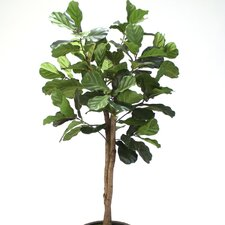 Fiddle Leaf Fig Tree in Planter