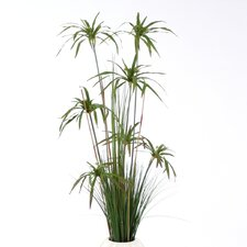 Umbrella Papyrus Floor Plant in Vase