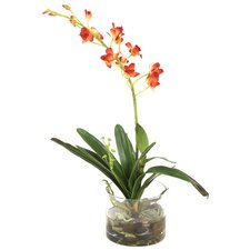 Waterlook Rust-Gold Orchid Plant in Glass Cylinder