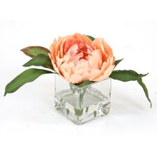 Waterlook Peach Peony in Square Glass (Set of 3)