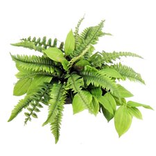 Greenery Desk Top Plant in Planter