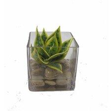 """Faux Plant """"water"""" Desk Top Plant in Terrarium"""