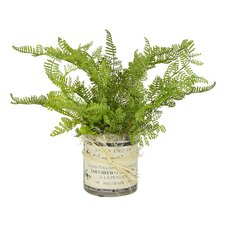 Fern French Label Pot