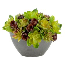 Cactus Arrangement Desk Top Plant in Decorative Vase