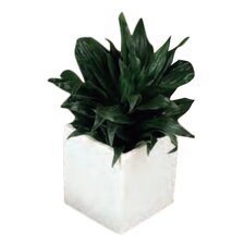 Urban Gardening Square Wall Planter
