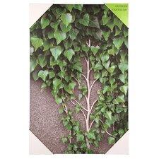 Leinwandbild Ivy Vine and Leaves, Fotodruck