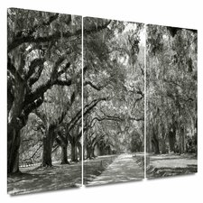 'Live Oak Avenue' by Steve Ainsworth 3 Piece Photographic Print on Wrapped Canvas Set