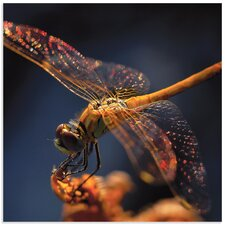 'Golden Dragonfly' by Thierry Dufour Photographic Print