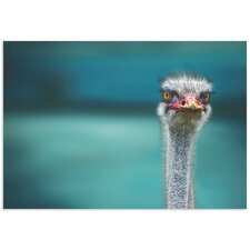'Ostrich' by Piet Flour Photographic Print