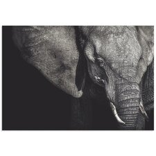 'The Matriarch Elephant' by Piet Flour Photographic Print