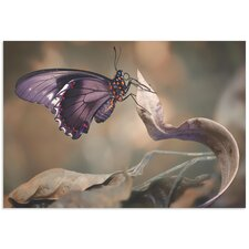 'Swallowtail Butterfly' by Jimmy Hoffman Butterfly Wall Art on Metal or Acrylic